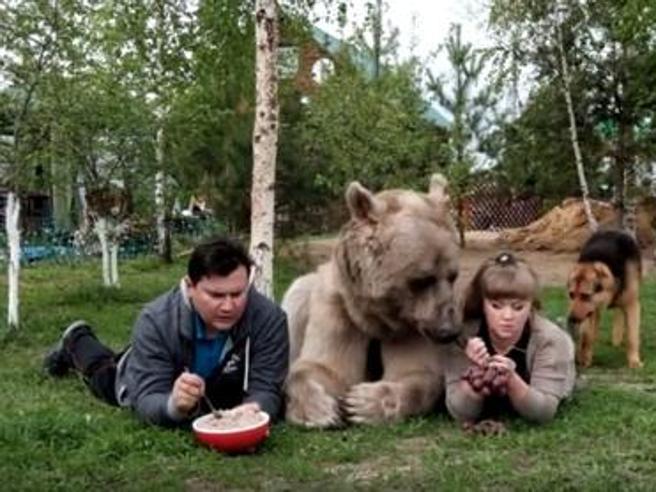 Russia, un orso come animale domestico?