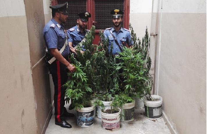 San giuseppe jato coltiva marijuana in casa arrestato for Arredi interni san giuseppe vesuviano