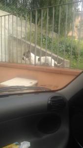 cane-circonvallazione2