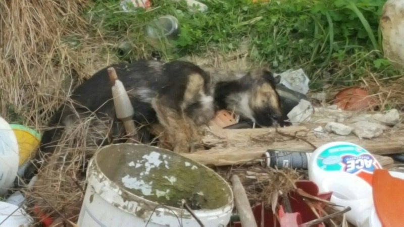 Polpette avvelenate e cuccioli uccisi a sassate: emergenza randagi a Grisì
