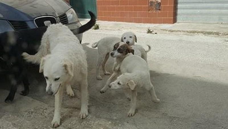 Torna l'incubo polpette avvelenate: a Partinico è di nuovo strage di cani