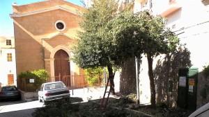alberi-pioppo2