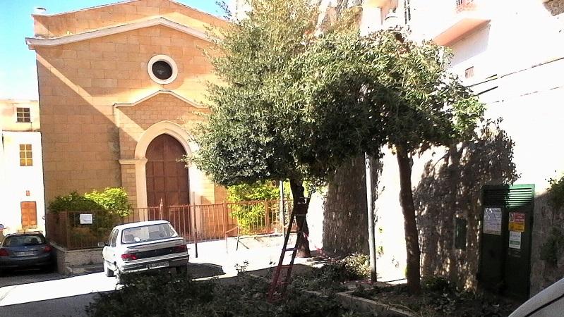 Pioppo, anche stavolta i cittadini fanno gli amministratori: e potano gli alberi