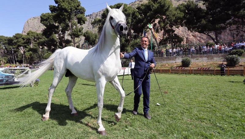 Palermo arabian horses cup i cavalli pi belli del for I mobili piu belli del mondo