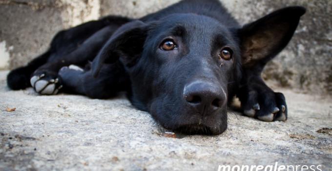 microchippatura randagio canile animalisti randagismo
