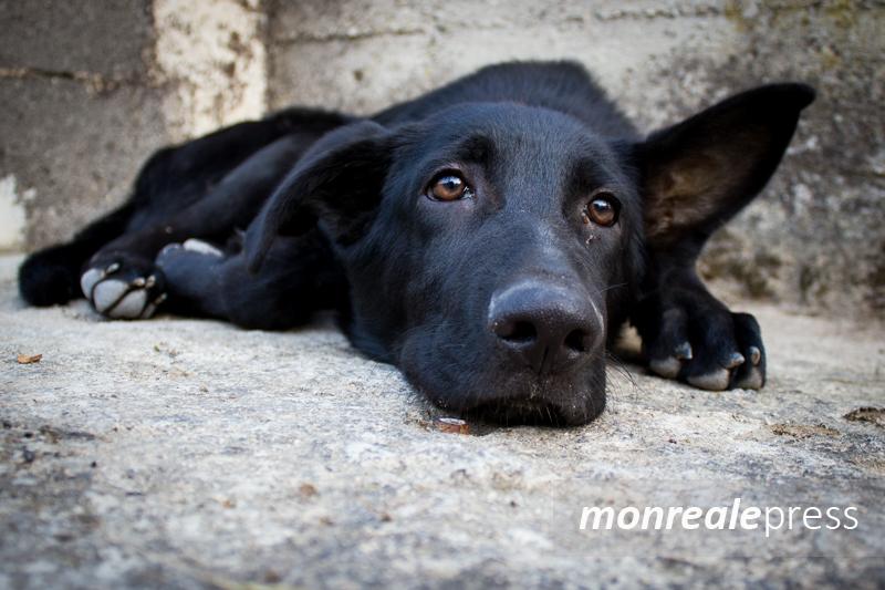 Non fate campagna elettorale speculando sui cani randagi