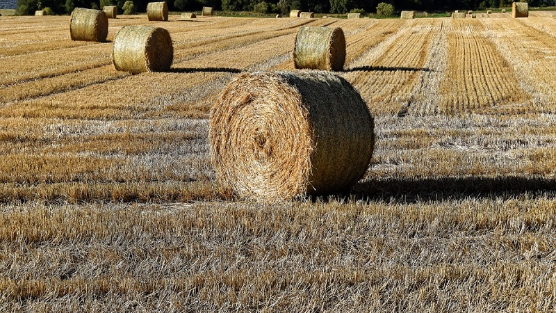 Pulire i terreni e coltivare l'orto: a breve si potrà anche a Monreale