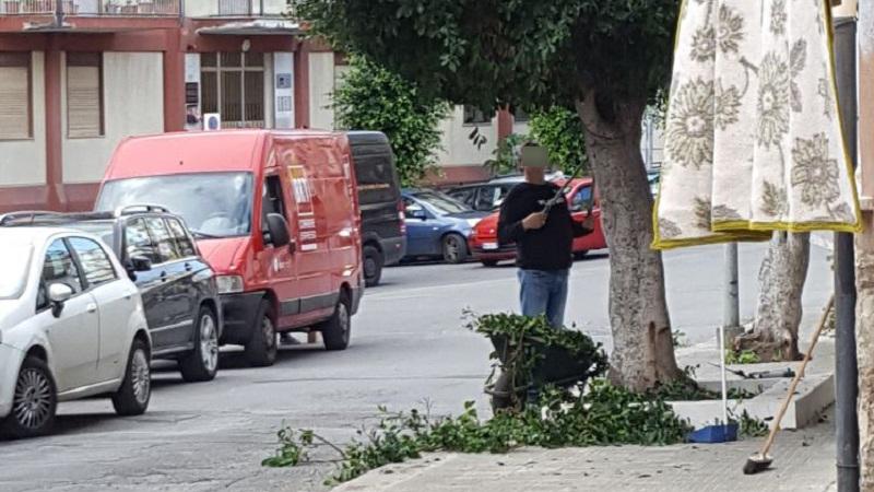 Monreale, potature degli alberi nei mesi sbagliati: così si uccidono le piante