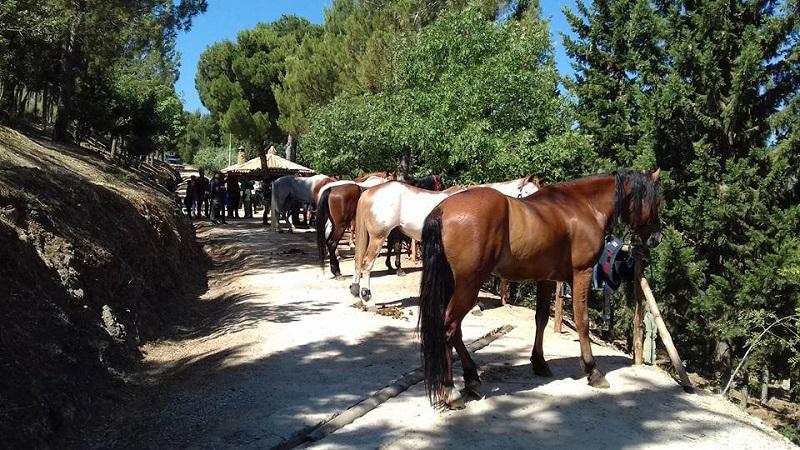 Villaciambra, degustazioni, giochi e gare di gimkana: il Natale al Ranch Oasi del Cavallo