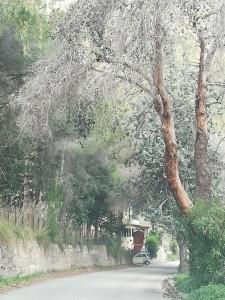 alberi-san-martino2