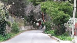 alberi-san-martino3
