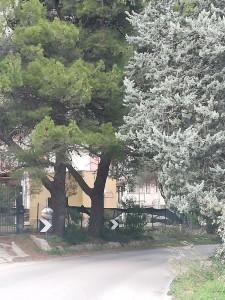 alberi-san-martino4