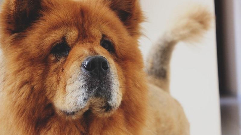Borse per cani, per averlo sempre con te al sicuro anche in mezzo al caos!