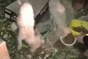 cuccioli-randagi1