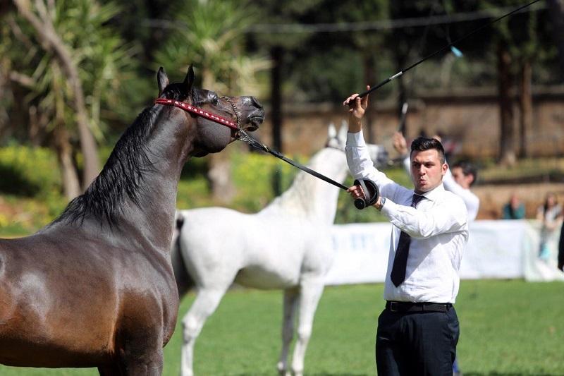 Palermo Arabian Horses Cup, i cavalli più belli del mondo in concorso alla Favorita
