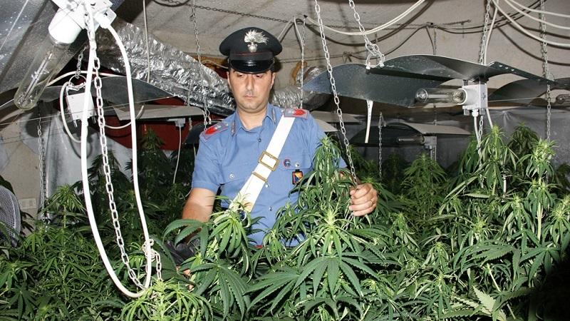 Partinico, una piantagione con 263 piante di marijuana scoperta dai carabinieri: un arresto