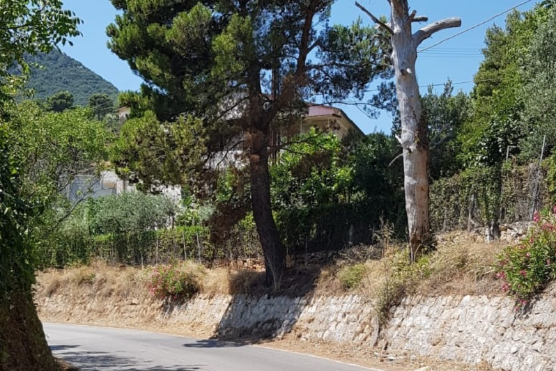 Alberi pericolosi a San Martino: sopralluogo e messa in sicurezza nei prossimi giorni