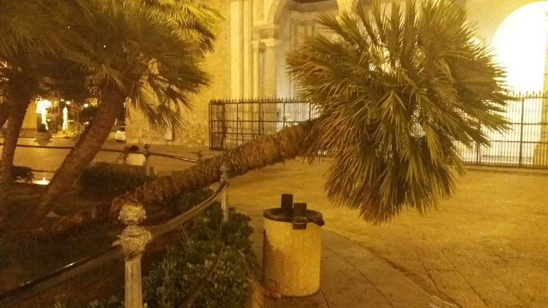 Monreale, scorribande notturne dei soliti vandali: spezzata la palma di piazza Guglielmo