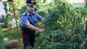 carabinieri piantagione