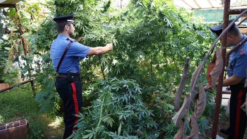 Villaciambra, i carabinieri scoprono piantagione di marijuana: un arresto