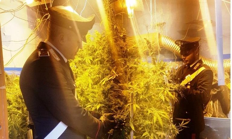 Palermo, la via invasa dall'inconfondibile odore: carabinieri scoprono piantagione di marijuana
