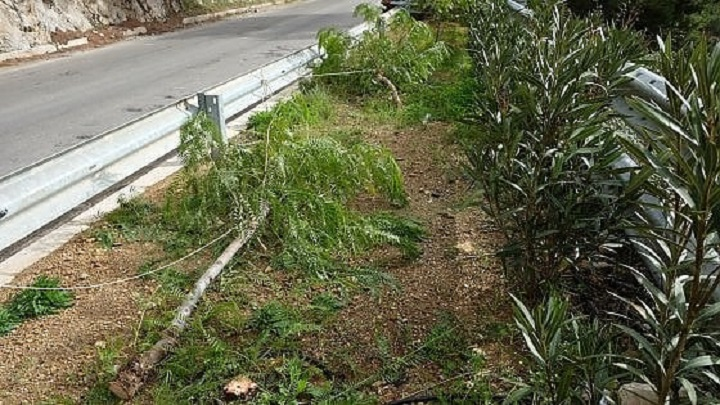 Boccadifalco, da discarica a villetta, ma a qualcuno non piace: e taglia gli alberi