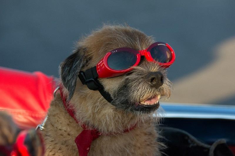 In vacanza con il cane? Ecco come organizzarla al meglio