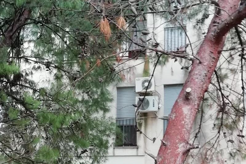 Dalla Regione 200 mila euro per le case popolari di Monreale
