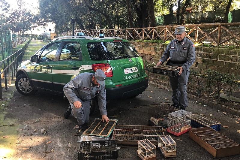 Palermo, blitz dei carabinieri al mercato di Ballarò: sequestrati 140 esemplari di cardellini