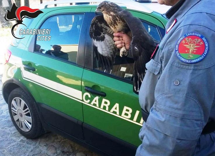 Palermo, deteneva due poiane illegalmente: denunciato