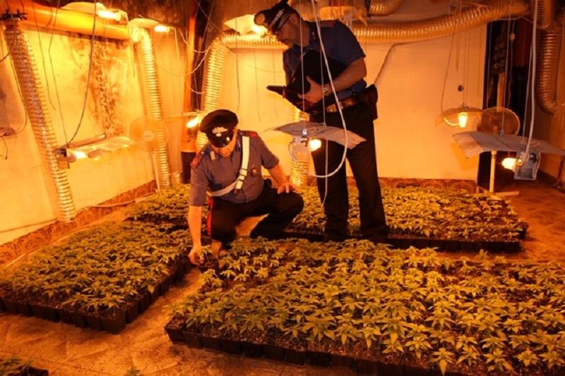 Pioppo, 897 piante di cannabis scoperte in una villetta: arrestato 62enne