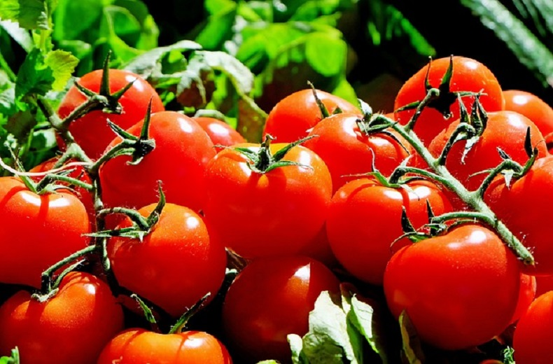 Cibo biologico, mercato in continua espansione: ecco i dati europei e italiani