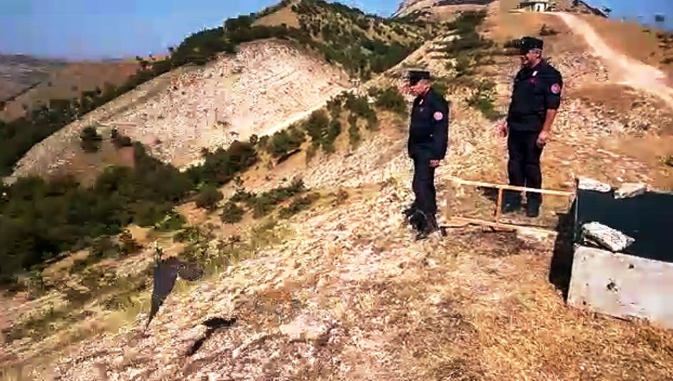 Salvati dai bracconieri, 5 esemplari di falco pellegrino tornano in libertà