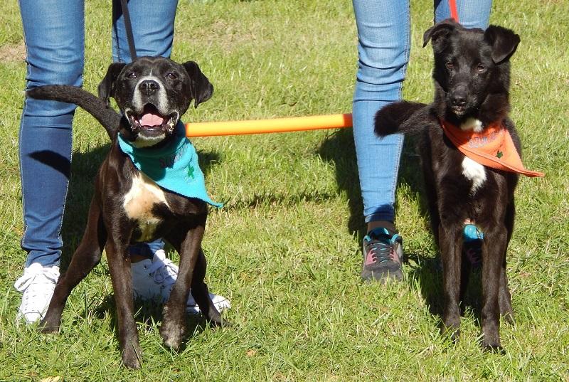 Con pedigree o senza, di razza o meticci: al Conca d'Oro la seconda edizione di Dog Show