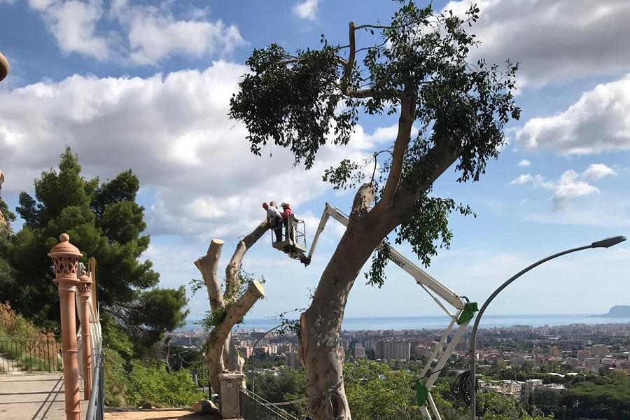 Panoramica, intervento degli operai: eseguita la potatura degli alberi