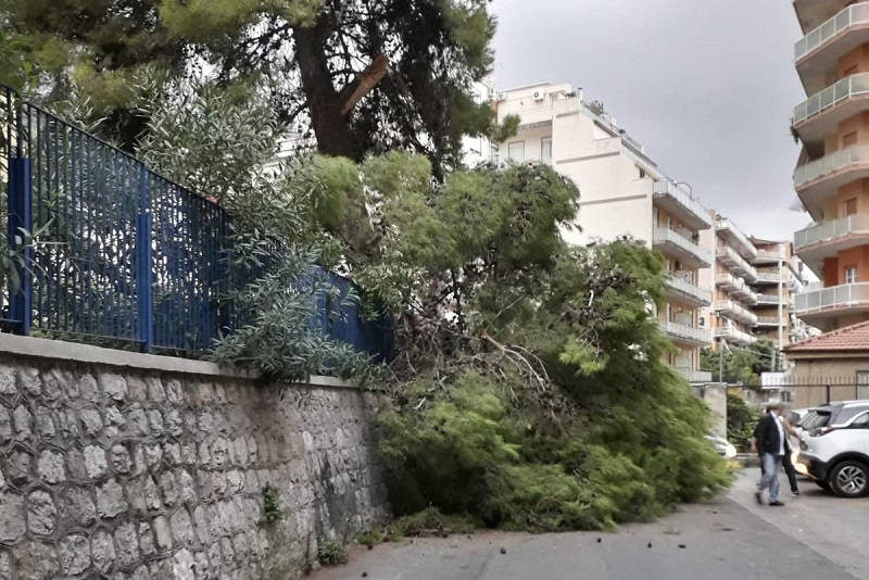 Crolla ramo di un albero in via Venero, tragedia sfiorata