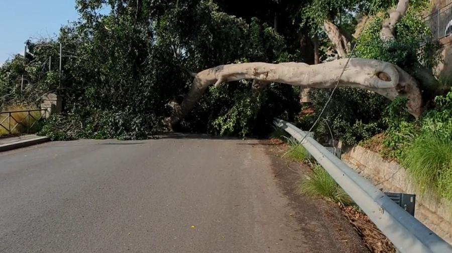 Rimosso l'albero caduto sulla strada: riaperta al traffico la Panoramica