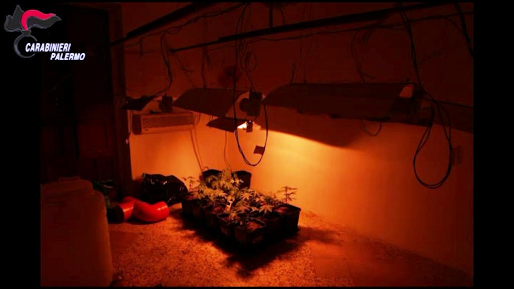 La piantagione casalinga nascosta nella stanza segreta: arrestata intera famiglia