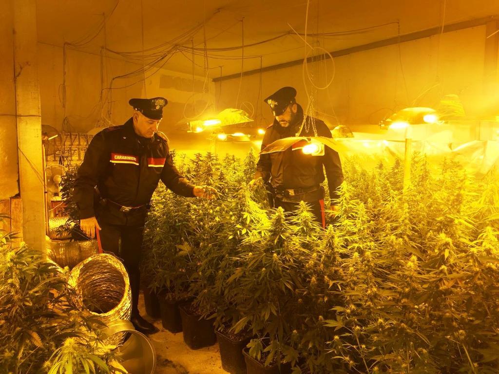 Strano via vai insospettisce i carabinieri: era una piantagione di cannabis