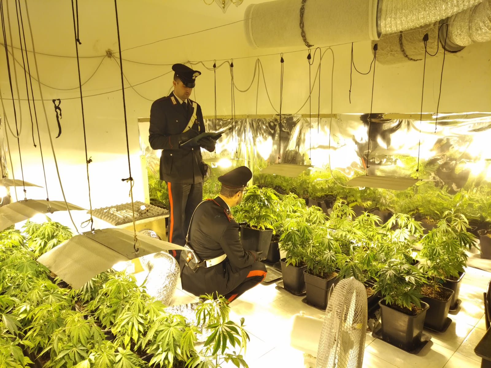Una serra di marijuana nella villa di Giacalone: due arrestati