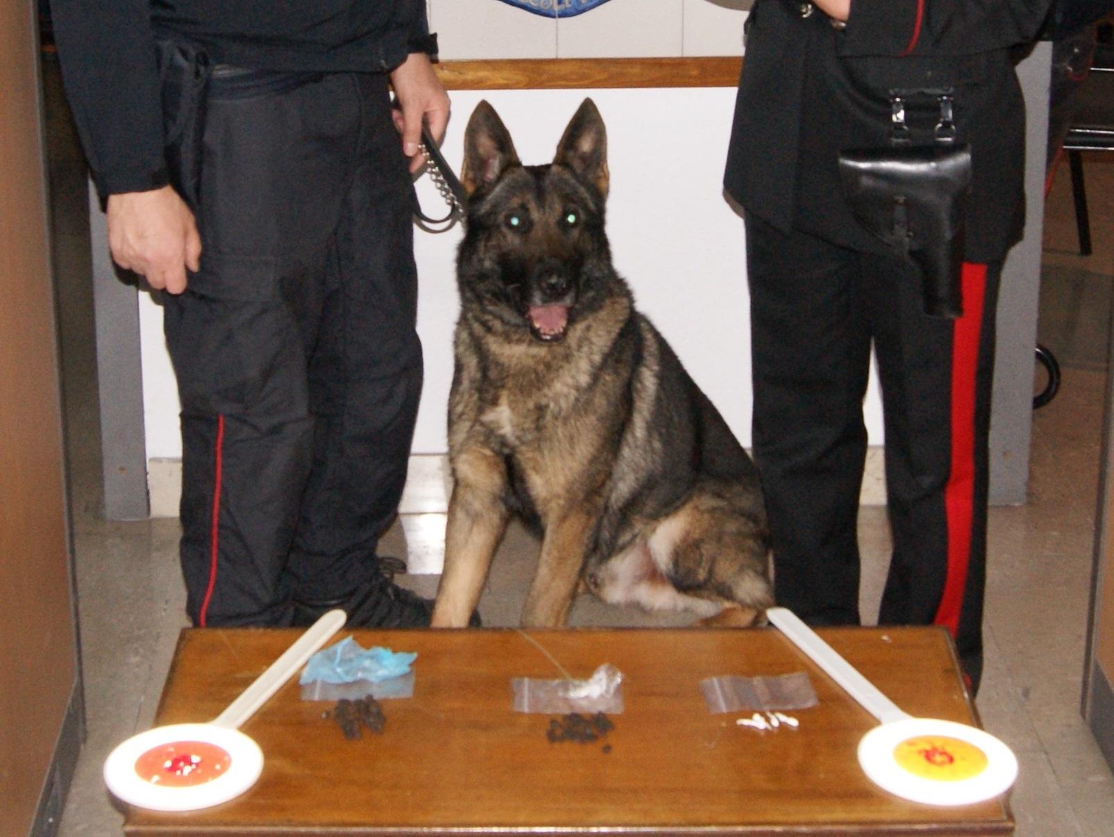 Il cane antidroga scova la droga nascosta in casa: arrestato 21enne