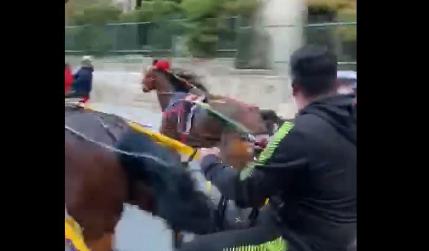 Corsa clandestina di cavalli a Palermo, sanzioni per 16 mila euro a 7 persone