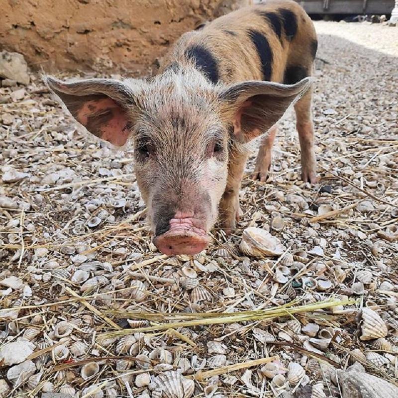 Benvenuti a Fadiouth, l'isola di conchiglie dove i maiali mangiano le vongole