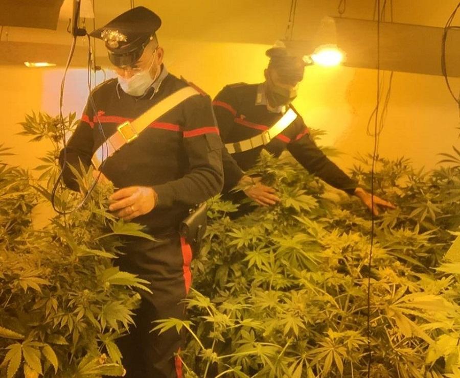 """Coltivavano marijuana con la luce """"a scrocco"""": arrestati due giovani"""