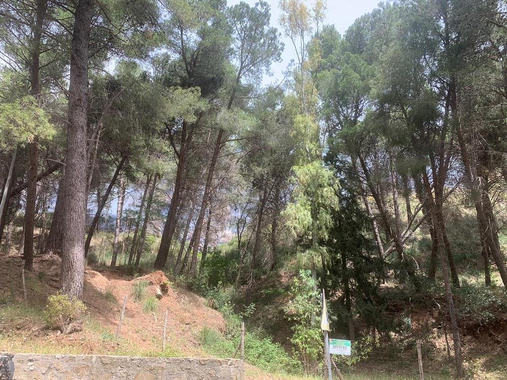 L'incendio a San Martino, la situazione si complica: scatta il piano di emergenza