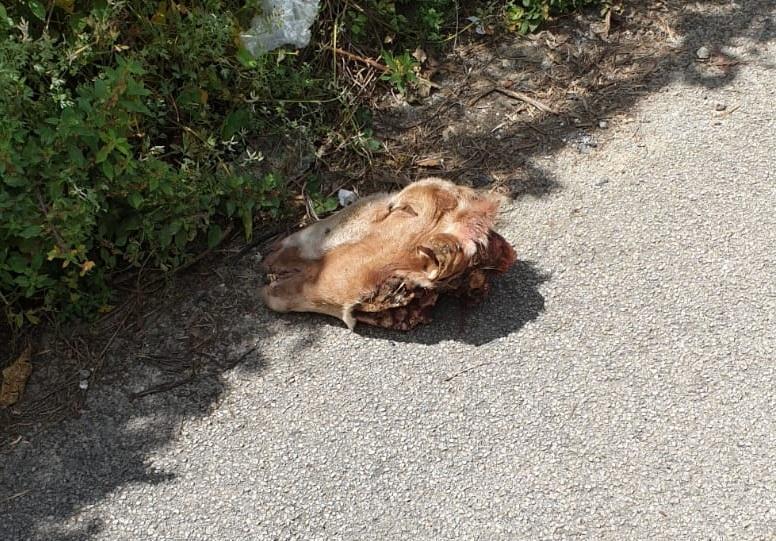 Testa di capra trovata per strada: la vergogna della macellazione abusiva