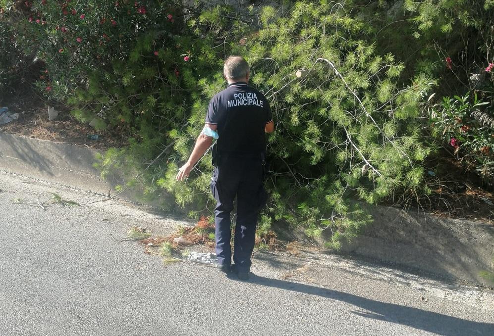 Albero cade sulla Sp 57, la municipale ripristina la circolazione