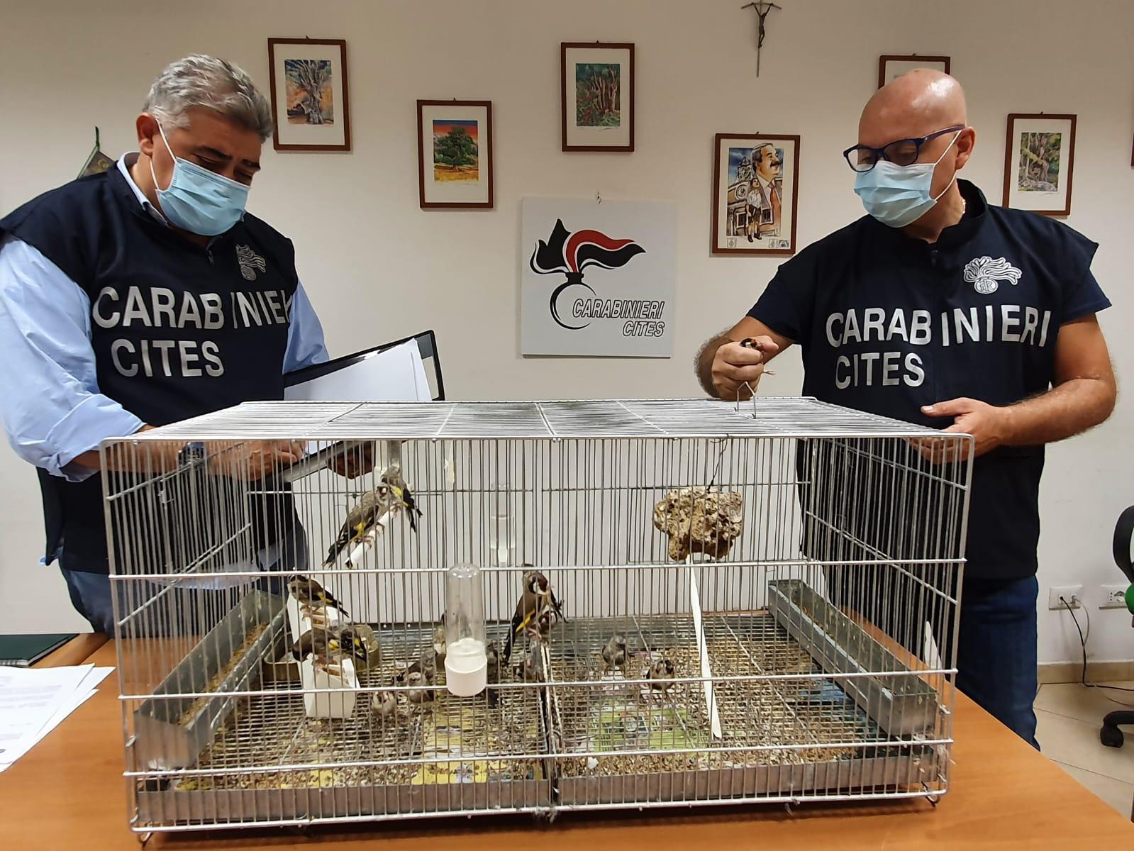 Bracconaggio, in casa deteneva 19 cardellini: denunciato giovane palermitano