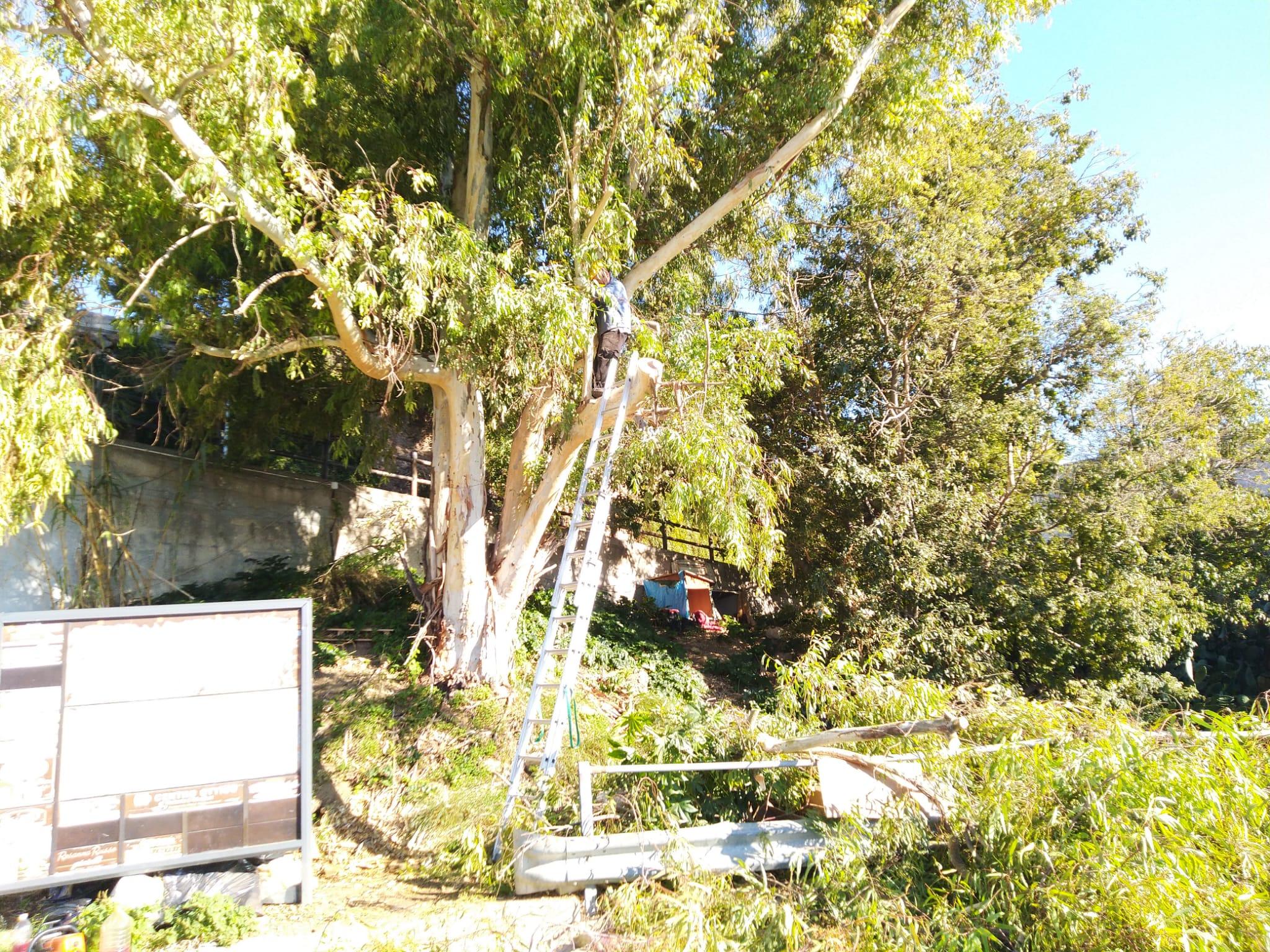 Alberi pericolosi, altro intervento di messa in sicurezza al parcheggio Cirba