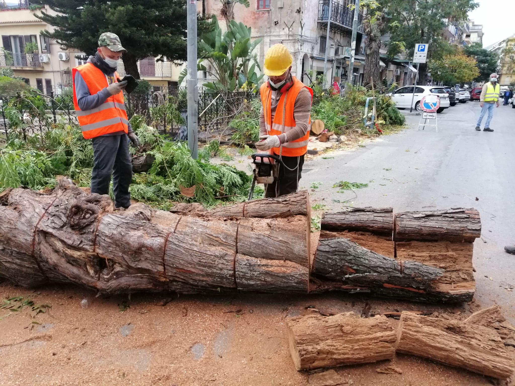 Pericolosi per passanti e auto: rimossi alberi della villetta di San Castrenze